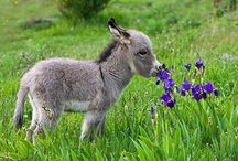 Donkeys / For the love of donkeys