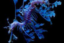 podwodne piękno