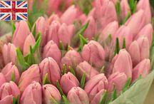 tulipas - rosas - uvas
