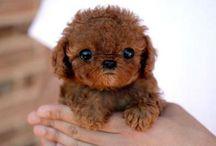 Animals: Cute Photos / by Brandie Neal