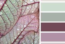 Color Palette s