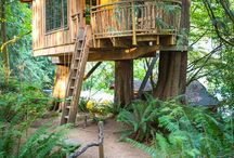 tree house and garden / külübe ve ağaç ev