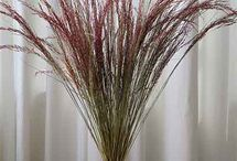 Decorative Dried Grasses / Decorative Dried Grasses available at Nettleton Hollow and/or Branches Wholesale.