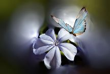 Цветы,Бабочки / ***