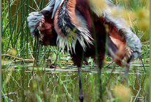 uccelli insoliti