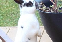 Things 4 GARDENING - CRITTER & PEST CONTROL / by Erica Haack