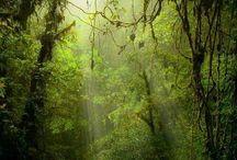 natuur:bos