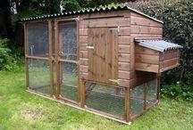 Chicken coops / Back yard