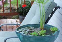 Water Plants and Water Gardening