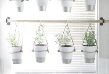 indoor plants and ideas