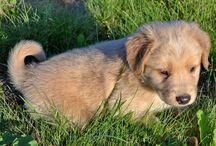 My doggi