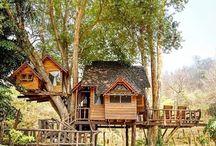 Tree House Dreamin'