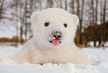 Сute cubs)))
