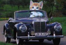 Kocie podróże
