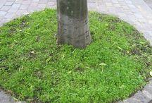 végétalisation de pieds d'arbres / moyens de végétaliser les pieds d'arbres en ville