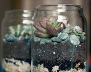 Mason Jar Planters / by Mason Jar Crafts {love!}