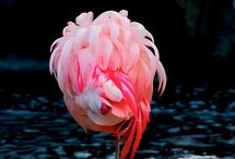 Flamingo love / by penny perala