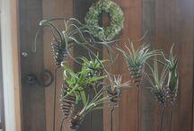Botanical & Green / NØGLE店内の個性的な植物たち