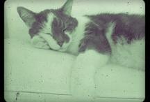 Katte/cats