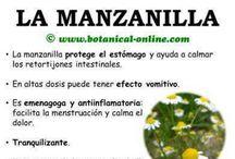 Manzanilla y otras hierbas