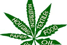 Industrial Hemp / Industrial hemp is a great green product that is often misunderstood with cannabis/marijuana. Once legal many years ago it was used for making rope and other items. Henry Ford made a car out of hemp plastic. Now it's coming back but still not legal in many areas of the USA. Bringing back industrial hemp would help farmers greatly and the environment since it is easy to grow, requires little work- no fertilizers/herbicides/pesticides. #hemp #legalizehemp #hempproducts / by Cedar House Inn & Yurts