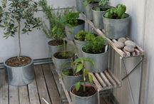 Balcony Gardening / Gardening tips for apartment dwellers