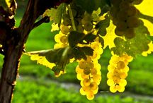 Discover Ohio Wines / A website that you will find out information about area wineries, events and other fun things to do while visiting Ohio wine country.  www.discoverohiowines.com