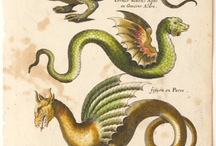 Drachen Illustration