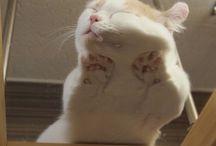 Gatti coccolosi