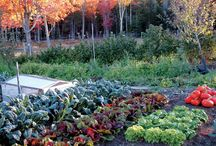 Gardening through Fall! / Gardening doesn't have to stop in August - Keep gardening through the fall for added bounty! #Garden #FallHarvest #FallBounty