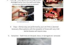 Dentista per Animali