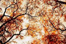my tree addiction / My love of trees