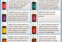 Essential oils for pets / by Michelle S