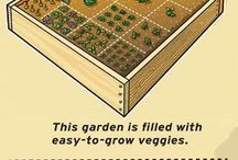 My veggie garden project