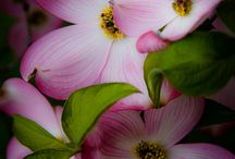 Flowers / some beautiful flowers and colors / by dorothy driscoll