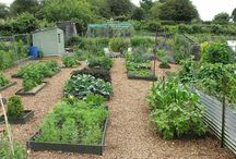 Allotment Inspiration