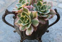 Succulent & cactus love