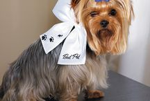 Furry Member of the Wedding Party / How to include your special four legged furry family member in your wedding - ideas and inspiration