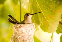 Birds_humming