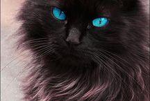 blue / 好きな青色