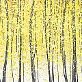 Yellow and Gray Color scheme / by Lianne Unger