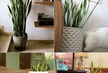 Healthy Home Things