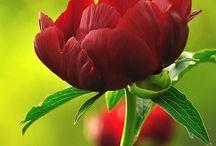 květinylife