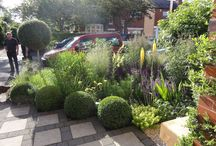 Cheshire Front Garden / A front garden that is small yet packed with seasonal flowers and evergreens.
