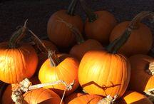 Fall Decor / Pansies, Pumpkins, Mums, Ornamental Peppers, etc...