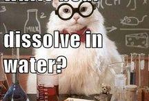 Chemist Memes