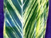 "Alpinia / Tropical Foliage ""Alpinia"" from Costa Rica"