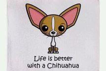 chihuis