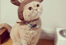Gatitos/Cats