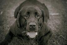 Pet Photography - My photos